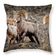 Ram Rock Mountain At Dawn Throw Pillow