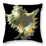 Rams Horn Seashell Murex Ramosus Throw Pillow