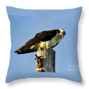 Raptor's Stare Throw Pillow