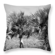 Rare Palm Trees Curacao Throw Pillow