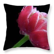 Raspberry Tulip Throw Pillow by Tracy Hall