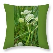 Rattlesnake Master Throw Pillow