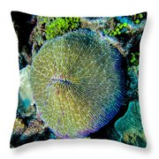 Razor Coral At Pakin Atoll Throw Pillow