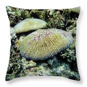 Razor Coral In Kwajalein Throw Pillow