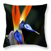 Ready Aim . . .  Throw Pillow