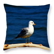 Ready For My Close-up Throw Pillow