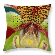 Ready Fpr My Close Up Throw Pillow