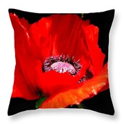 Red Poppy Photograph Throw Pillow