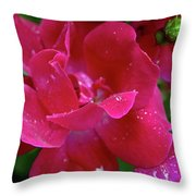 Ready To Celebrate Throw Pillow