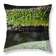 Ready To Spread Throw Pillow by Amanda Barcon