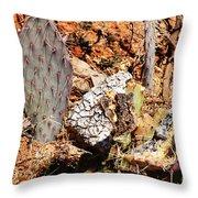 Real Cactus In An Actual Desert  Throw Pillow