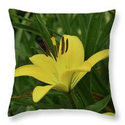 Really Beautiful Yellow Lily Growing In Nature Throw Pillow