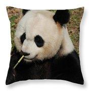 Really Cute Giant Panda Bear With Bamboo Throw Pillow