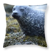 Really Cute Harbor Seal On Seaweed Throw Pillow