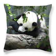 Really Cute Panda Bear Sleeping On A Log Throw Pillow