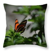 Really Elegant Oak Tiger Butterfly In Nature Throw Pillow