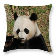 Really Great Panda Bear Chomping On A Fistful Of Bamboo Throw Pillow