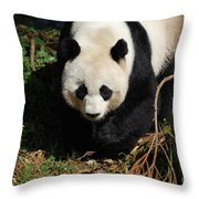 Really Sweet Giant Panda Bear Waddling Around Throw Pillow