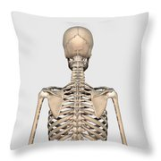 Rear View Of Human Skeletal System Throw Pillow