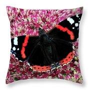 Red Admiral Butterfly Vanesa Atalanta Throw Pillow