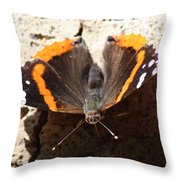 Red Admiral Close Throw Pillow