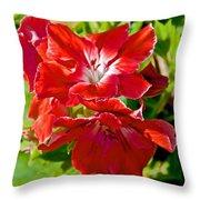 Red Amaryllis At Pilgrim Place In Claremont-california Throw Pillow