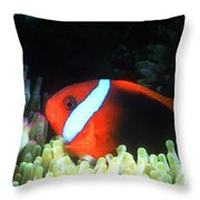 Red And Black Anemonefish, Great Barrier Reef Throw Pillow