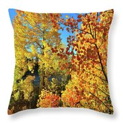 Red And Golden Aspens In Dillon Co Throw Pillow