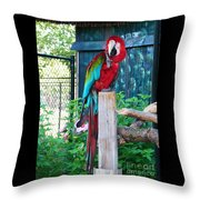 Red  And  Green Macaw         Zoo      Indiana Throw Pillow
