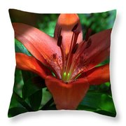 Red And Green No. 2 Throw Pillow