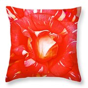 Red And White Rose In Puerto Varas-chile Throw Pillow