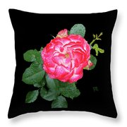 Red And White Rose In Rain Throw Pillow