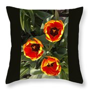 Red And Yellow Tulip Trio    Spring  Indiana Throw Pillow