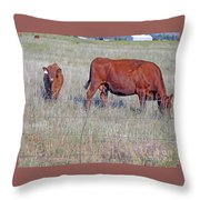 Red Angus Cow And Calf Throw Pillow