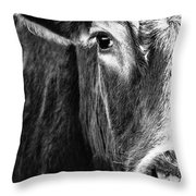 Red Angus In Black And White  Throw Pillow