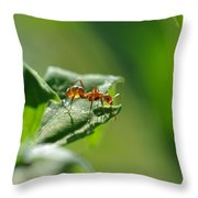 Red Ant On Leaf Throw Pillow