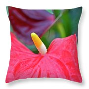 Red Anthurium Flower Throw Pillow