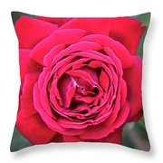Red As A Rose  Throw Pillow