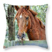 Red At The Fence Throw Pillow