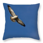 Red-backed Hawk Throw Pillow