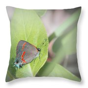 Red-banded Hairstreak Butterfly Throw Pillow