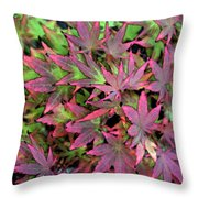 Red Bark Maple Leaves  Throw Pillow