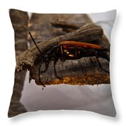 Red Beetle At Twlight Throw Pillow