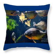 Red Bellied Piranha Fishes Throw Pillow