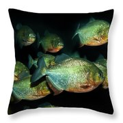 Red-bellied Piranha Throw Pillow