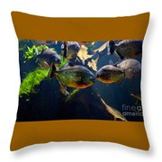 Red Bellied Piranha Or Red Piranha Throw Pillow