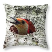 Red-bellied Woodpecker 02 Throw Pillow by Al Powell Photography USA