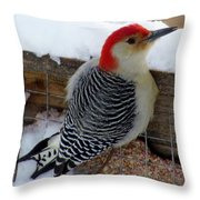 Red Bellied Woodpecker 5 Throw Pillow
