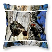 Red Bellied Woodpecker Harassed By A Starling Throw Pillow