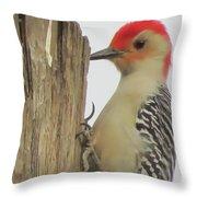 Red-bellied Woodpecker II Throw Pillow